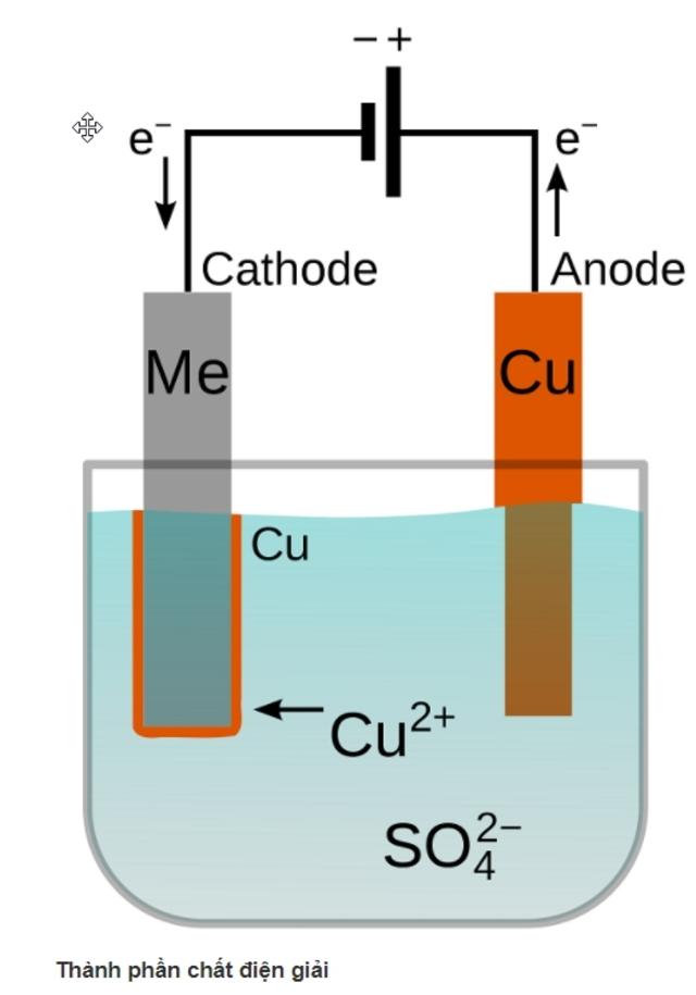 Thành phần chất điện giải